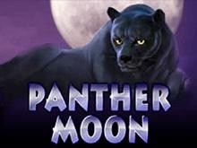 Автомат на деньги Panther Moon